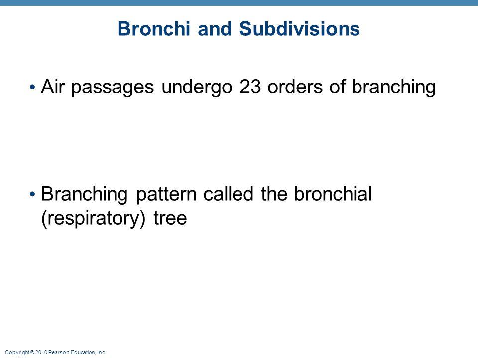 Bronchi and Subdivisions