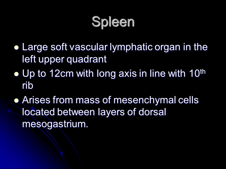 Spleen Large soft vascular lymphatic organ in the left upper quadrant