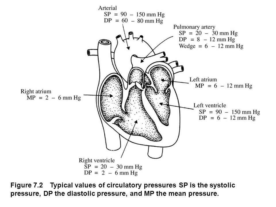 fig_07_02 Figure 7.2 Typical values of circulatory pressures SP is the systolic pressure, DP the diastolic pressure, and MP the mean pressure.