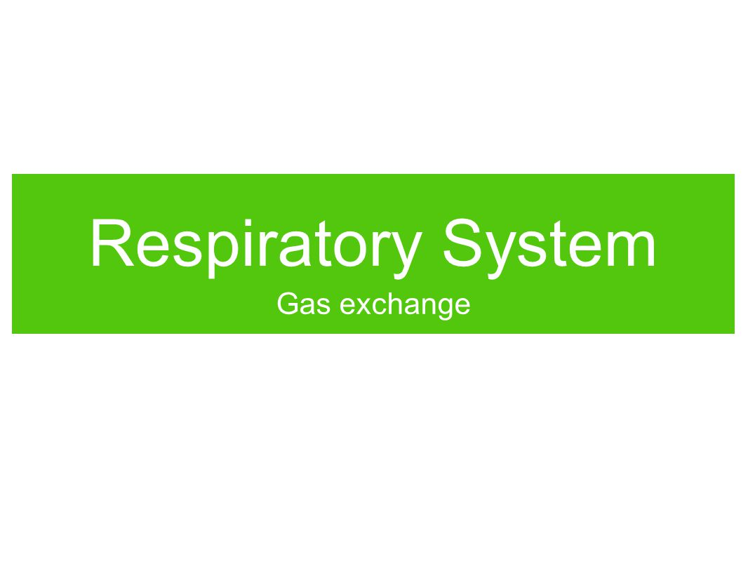 Respiratory System Gas exchange