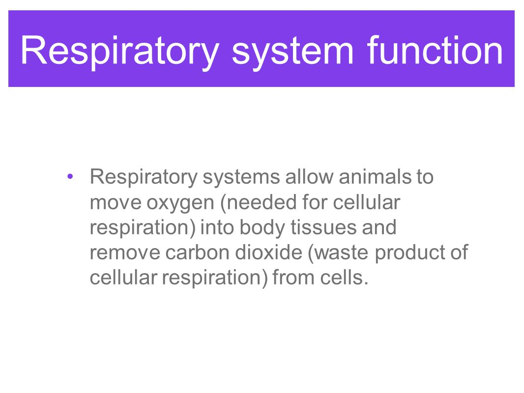 Respiratory system function