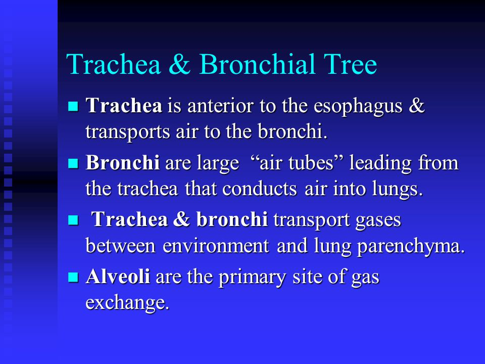 Trachea & Bronchial Tree