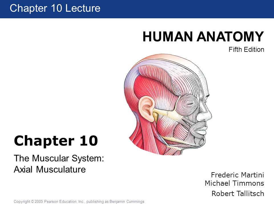 The Muscular System Axial Musculature Ppt Video Online Download
