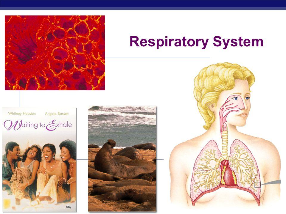 Respiratory System 2008-2009