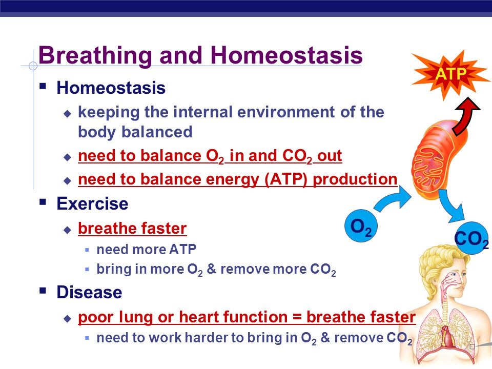 Breathing and Homeostasis