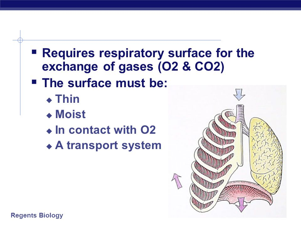 Requires respiratory surface for the exchange of gases (O2 & CO2)
