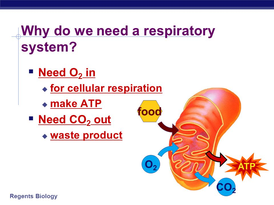 Why do we need a respiratory system