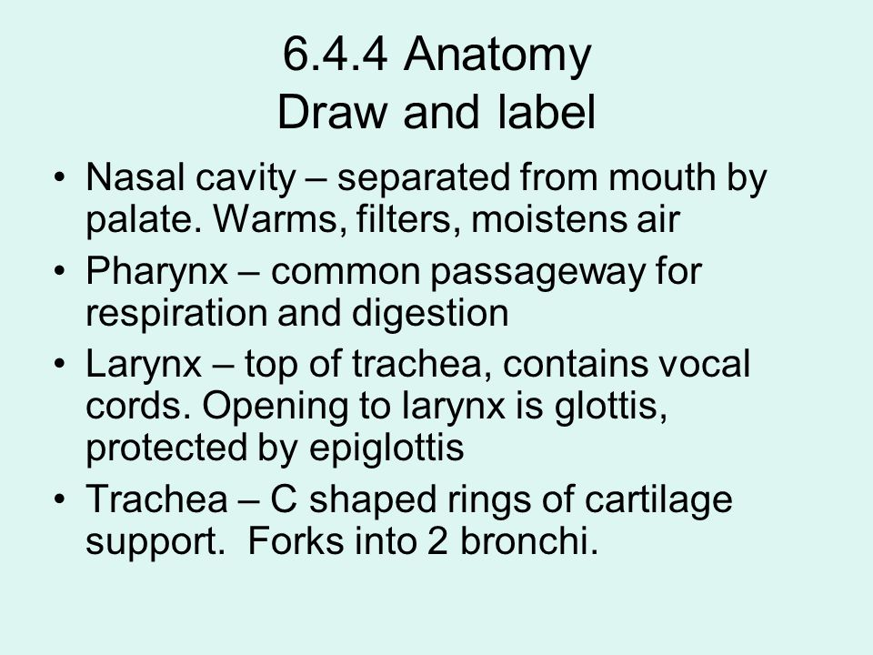 6.4.4 Anatomy Draw and label Nasal cavity – separated from mouth by palate. Warms, filters, moistens air.