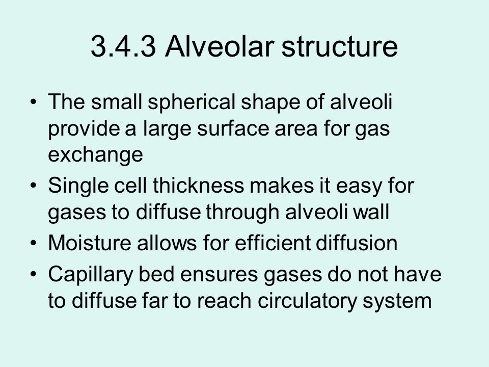 3.4.3 Alveolar structure The small spherical shape of alveoli provide a large surface area for gas exchange.