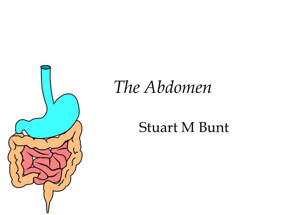 The Abdomen Stuart M Bunt Functional Anatomy 212