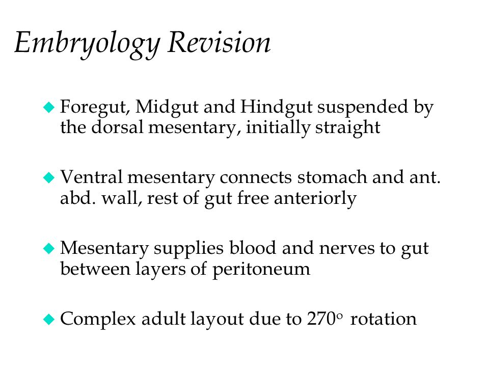 Embryology Revision Foregut, Midgut and Hindgut suspended by the dorsal mesentary, initially straight.