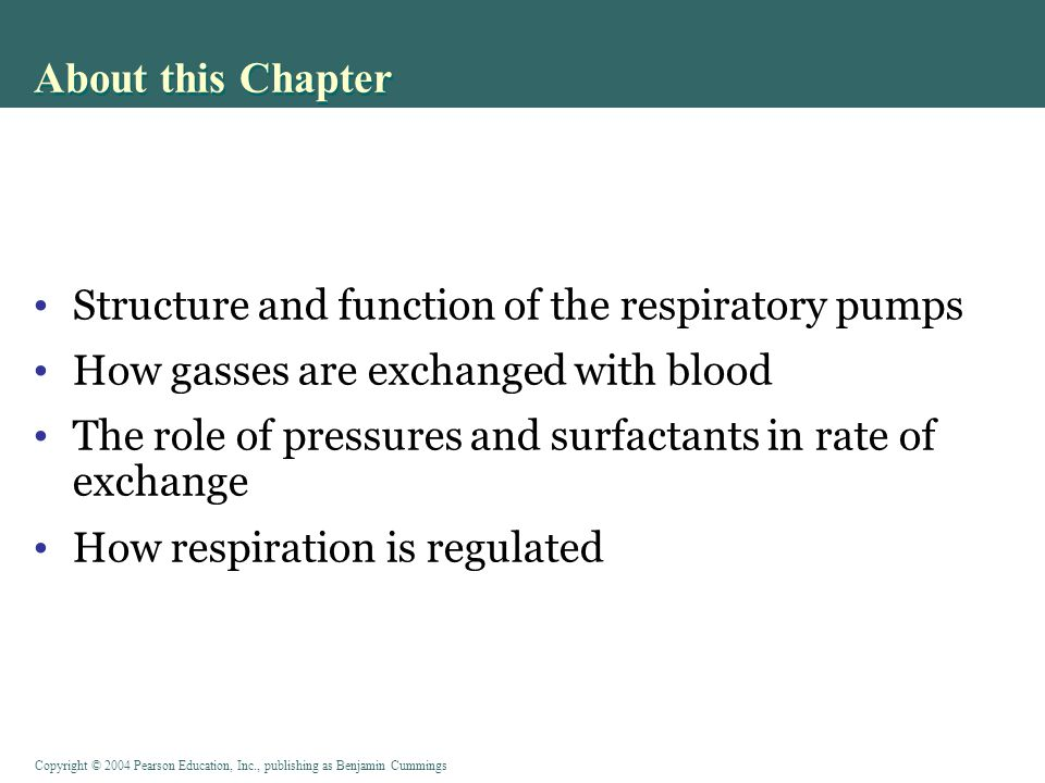 About this Chapter Structure and function of the respiratory pumps