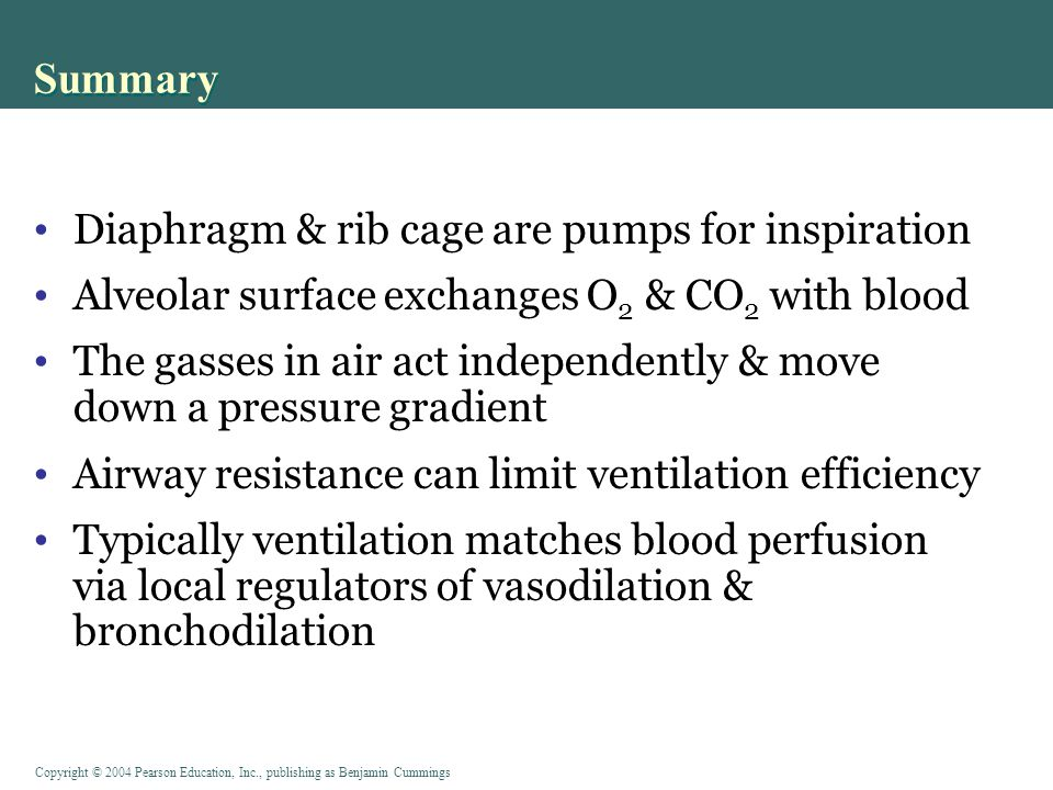 Summary Diaphragm & rib cage are pumps for inspiration