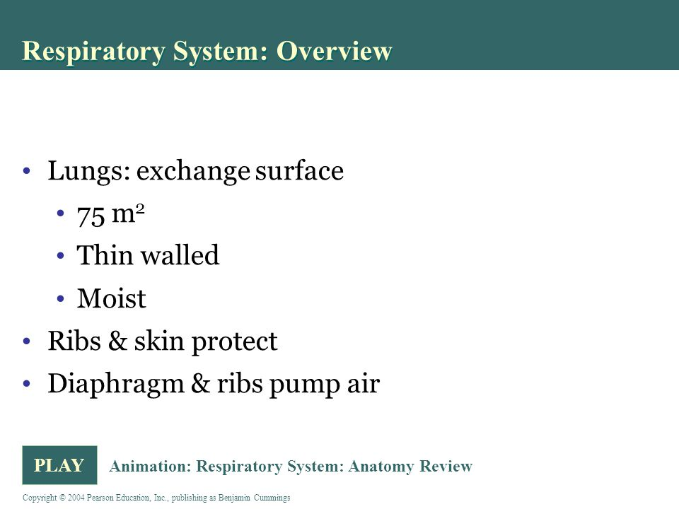 Respiratory System: Overview