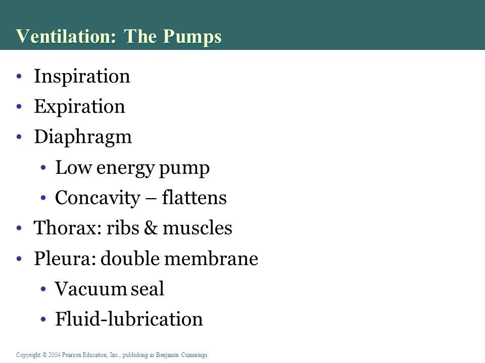 Ventilation: The Pumps