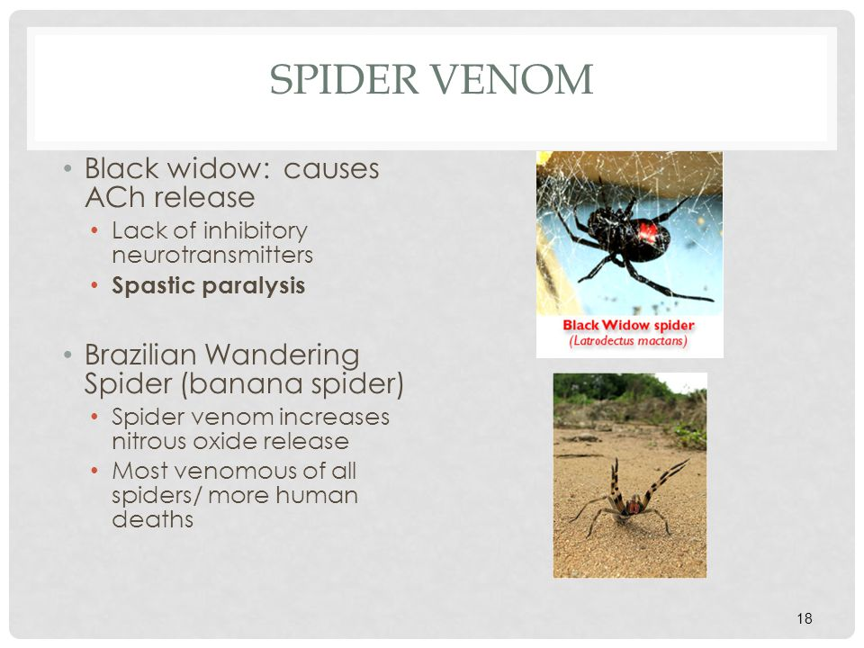 Spider Venom Black widow: causes ACh release