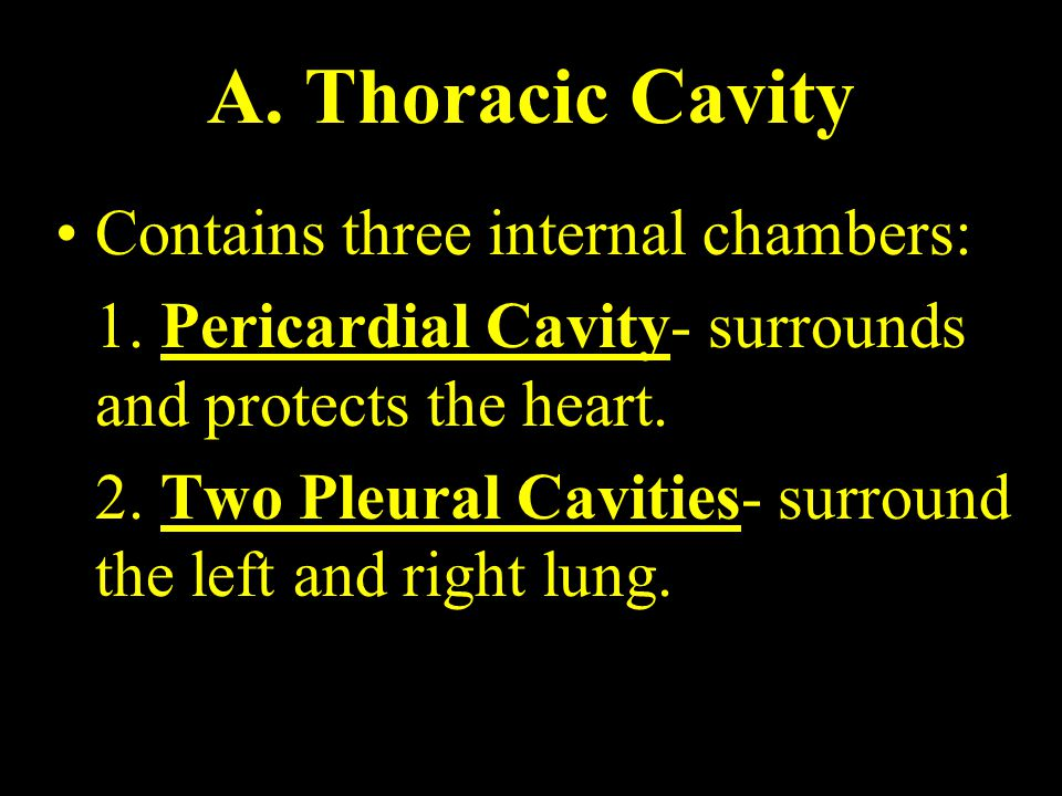 A. Thoracic Cavity Contains three internal chambers: