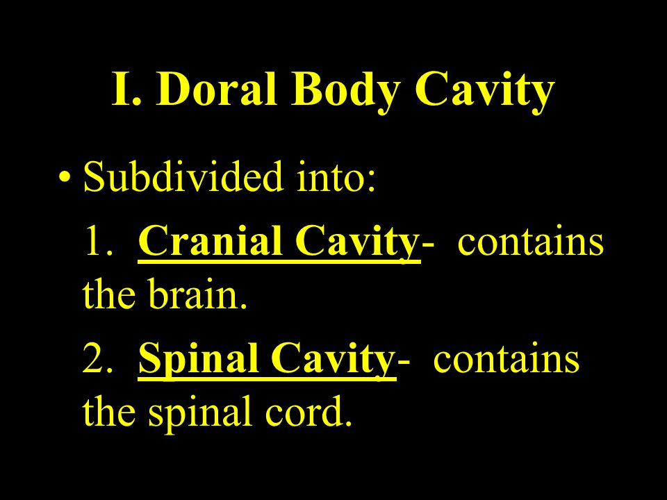 I. Doral Body Cavity Subdivided into: