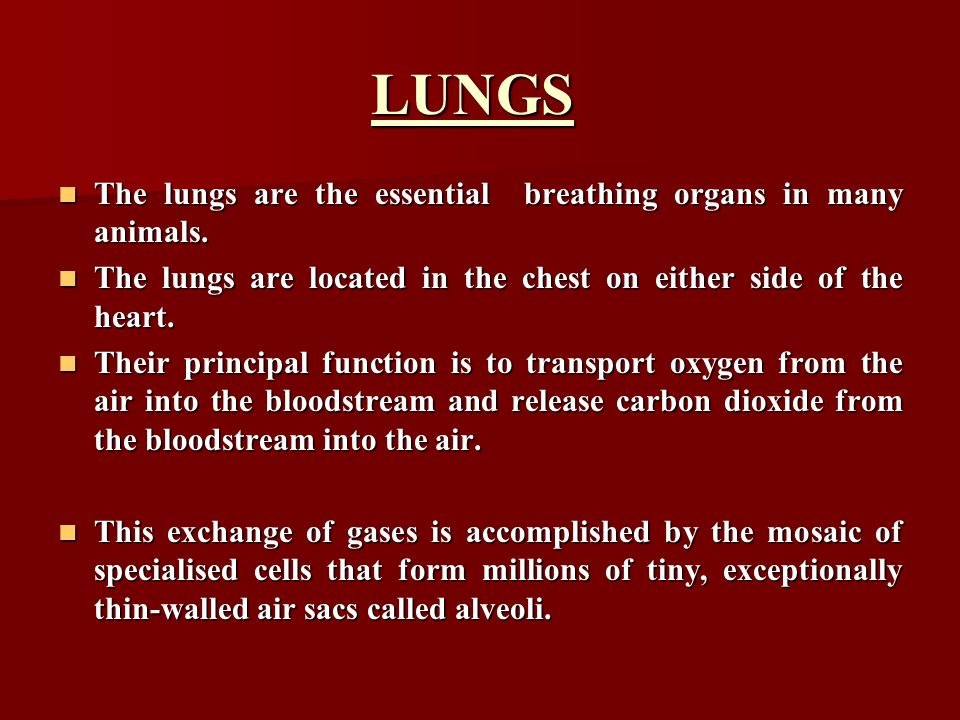 LUNGS The lungs are the essential breathing organs in many animals.