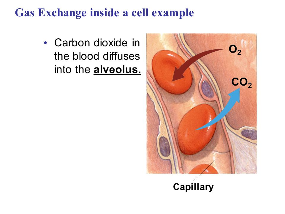 Gas Exchange inside a cell example