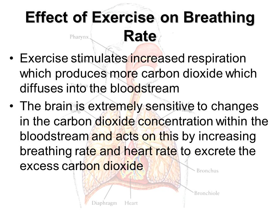 Effect of Exercise on Breathing Rate