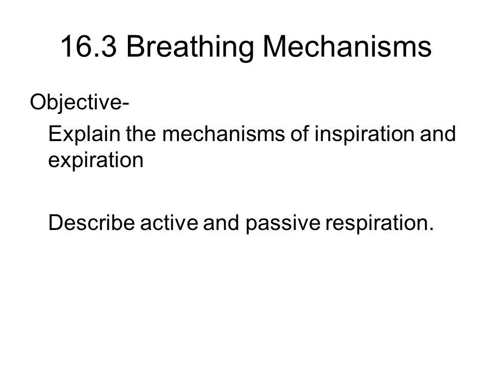 16.3 Breathing Mechanisms Objective-