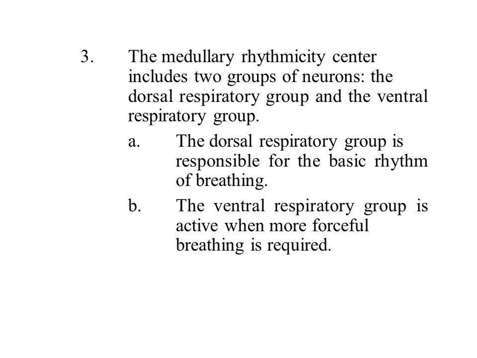 3. The medullary rhythmicity center