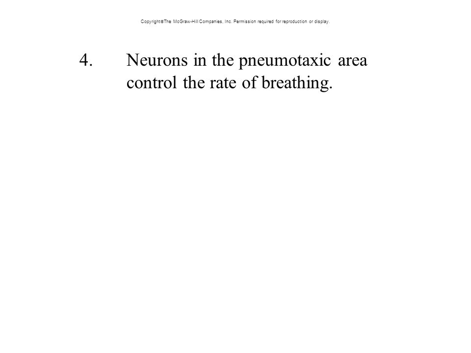 4. Neurons in the pneumotaxic area control the rate of breathing.