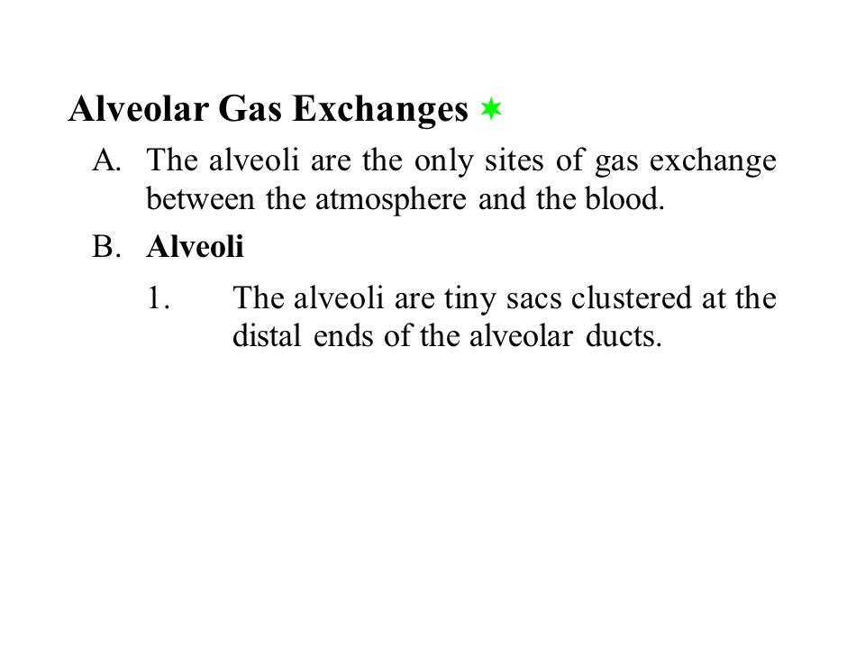 Alveolar Gas Exchanges 