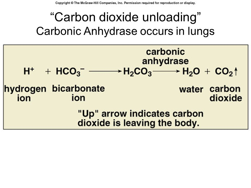 Carbon dioxide unloading Carbonic Anhydrase occurs in lungs