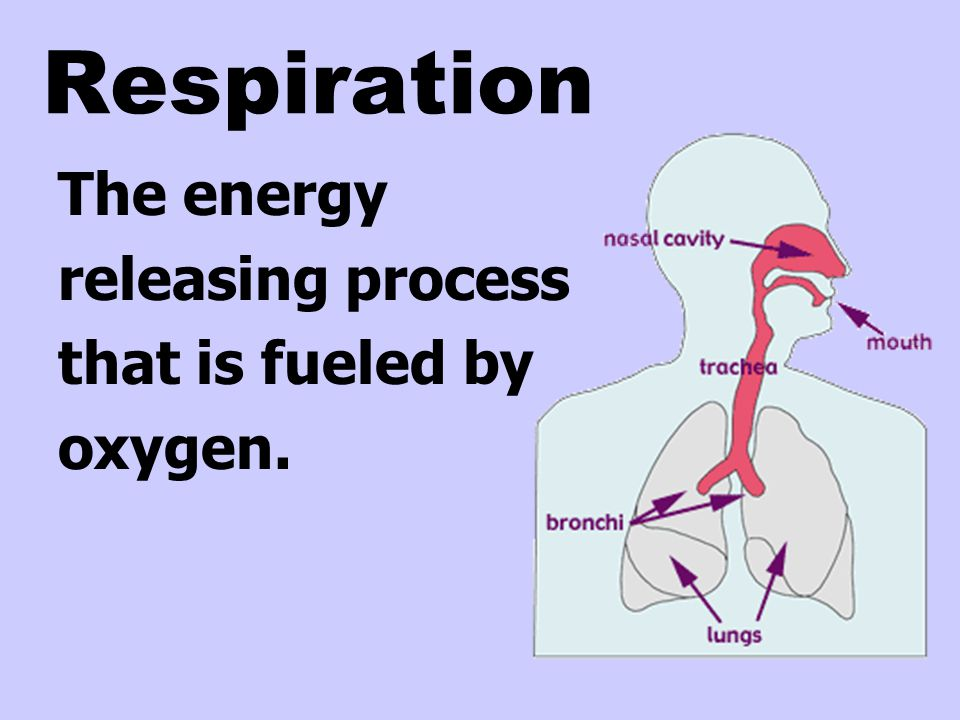 Respiration The energy releasing process that is fueled by oxygen.