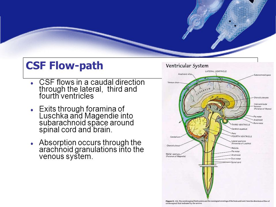 CSF Flow-path CSF flows in a caudal direction through the lateral, third and fourth ventricles.
