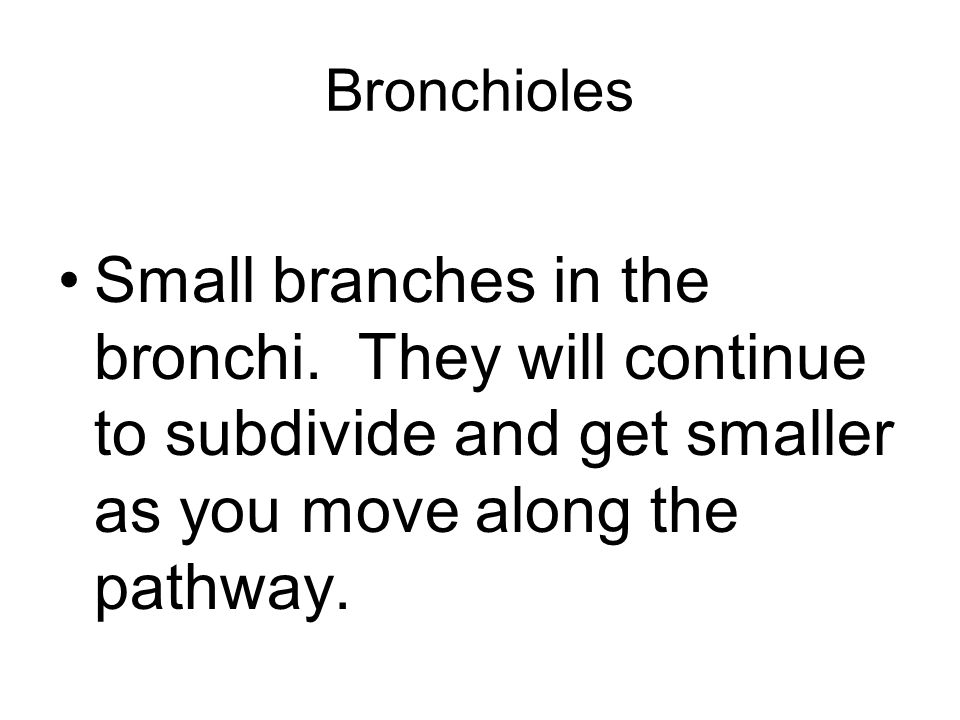 Bronchioles Small branches in the bronchi.