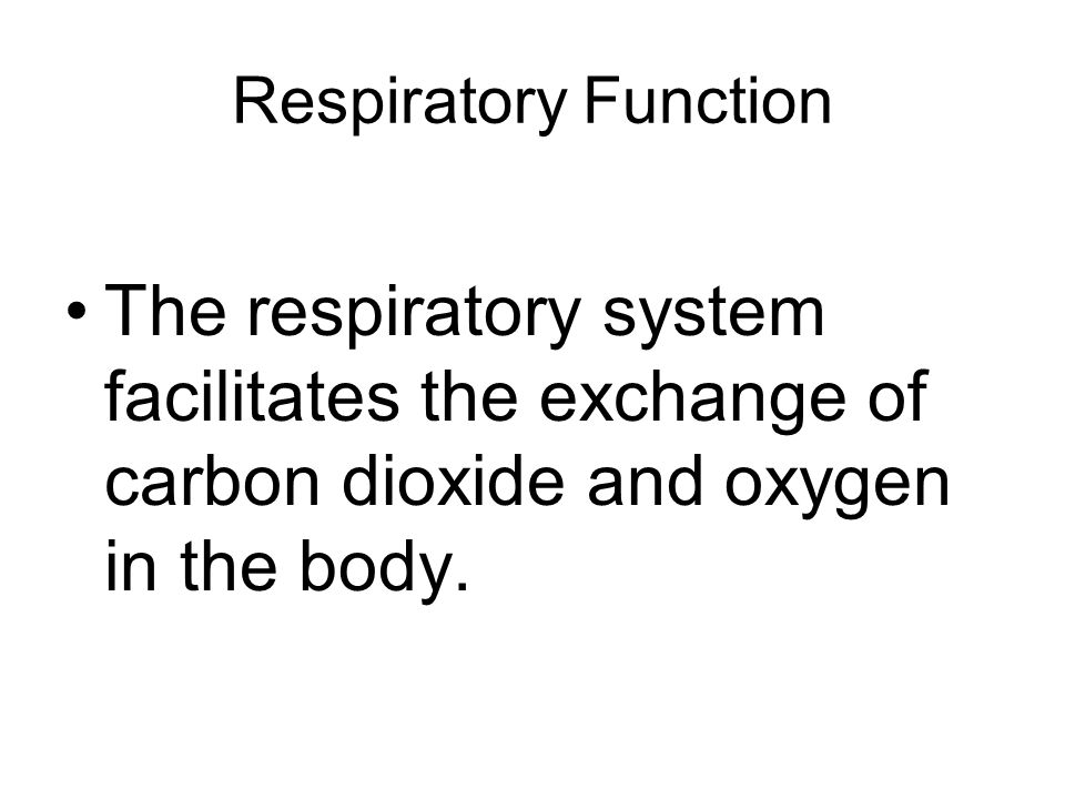 Respiratory Function The respiratory system facilitates the exchange of carbon dioxide and oxygen in the body.
