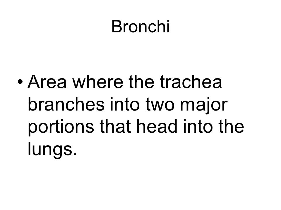 Bronchi Area where the trachea branches into two major portions that head into the lungs.