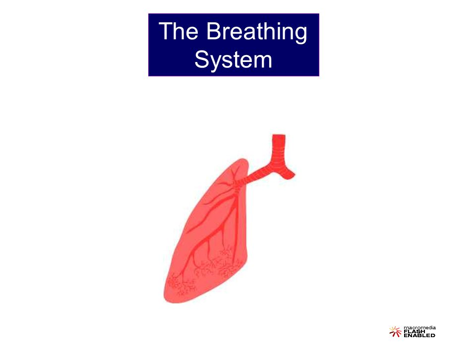 The Breathing System