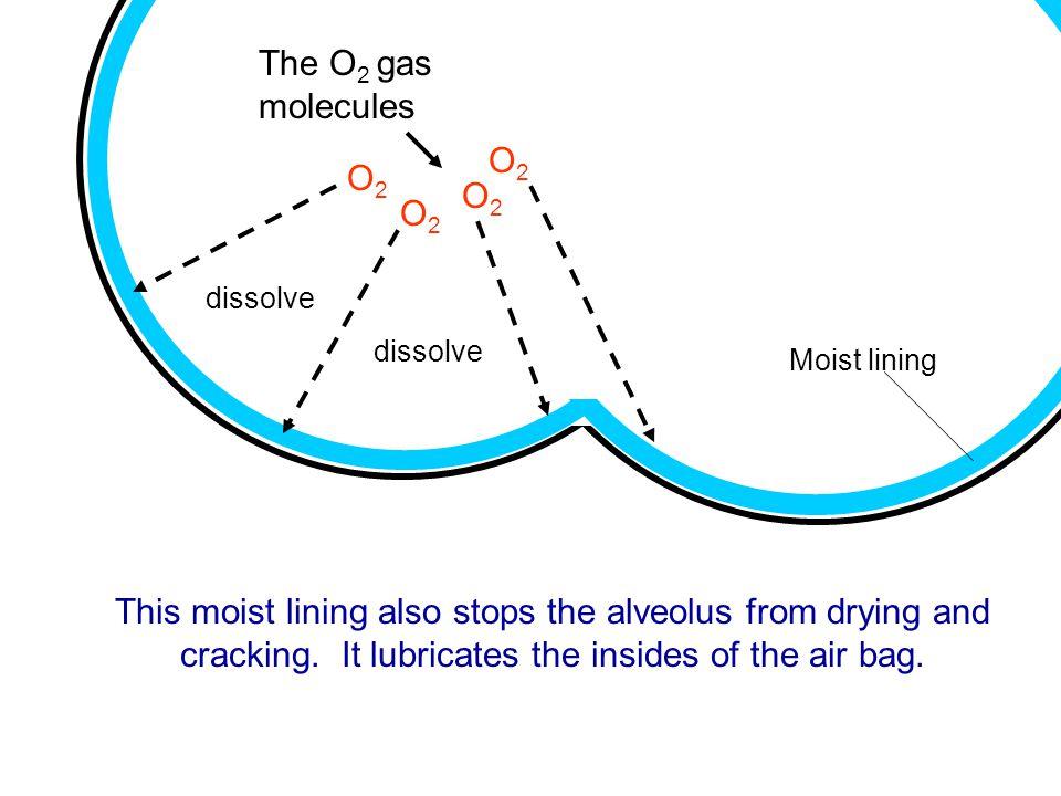 The O2 gas molecules O2 O2 O2 O2