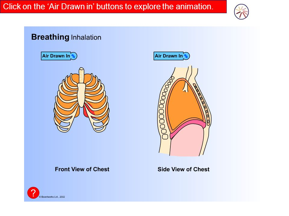 Click on the 'Air Drawn in' buttons to explore the animation.
