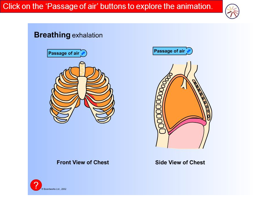 Click on the 'Passage of air' buttons to explore the animation.