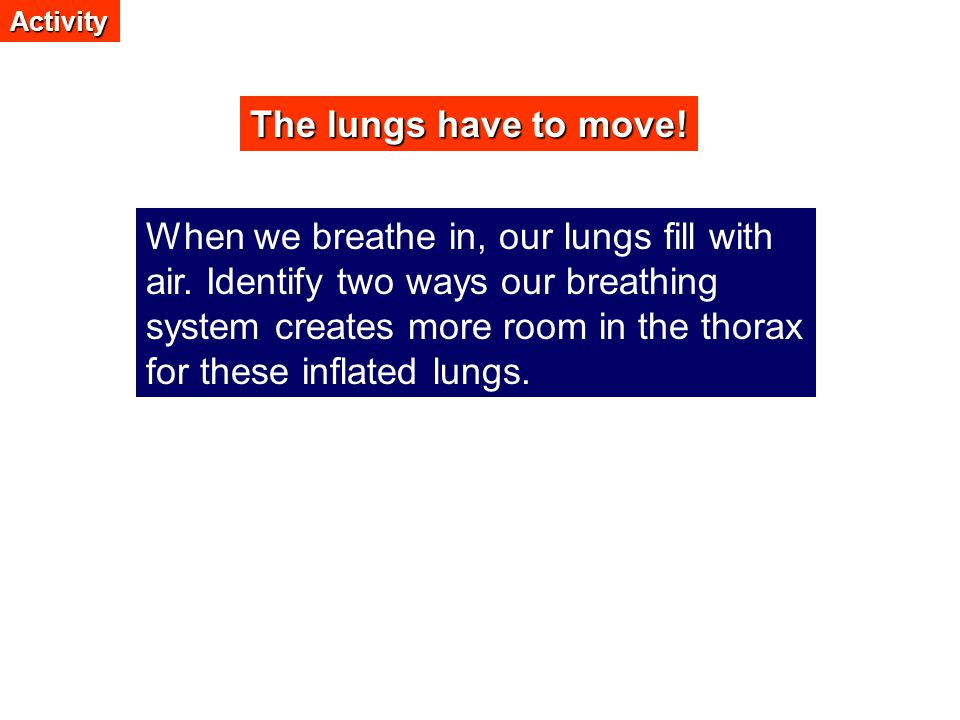 Activity The lungs have to move!