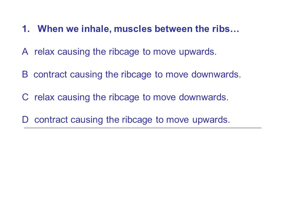1. When we inhale, muscles between the ribs…