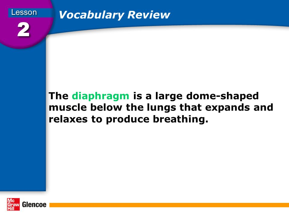 Vocabulary Review The diaphragm is a large dome-shaped muscle below the lungs that expands and relaxes to produce breathing.