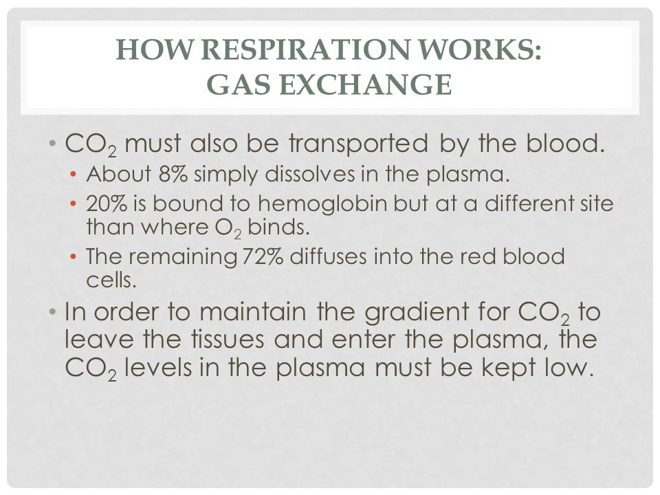 How Respiration Works: Gas Exchange