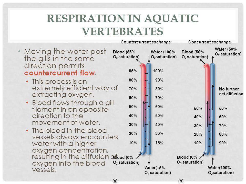 Respiration in Aquatic Vertebrates
