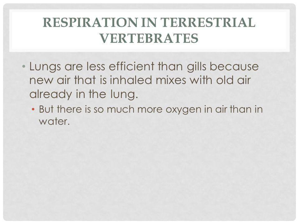 Respiration in Terrestrial Vertebrates
