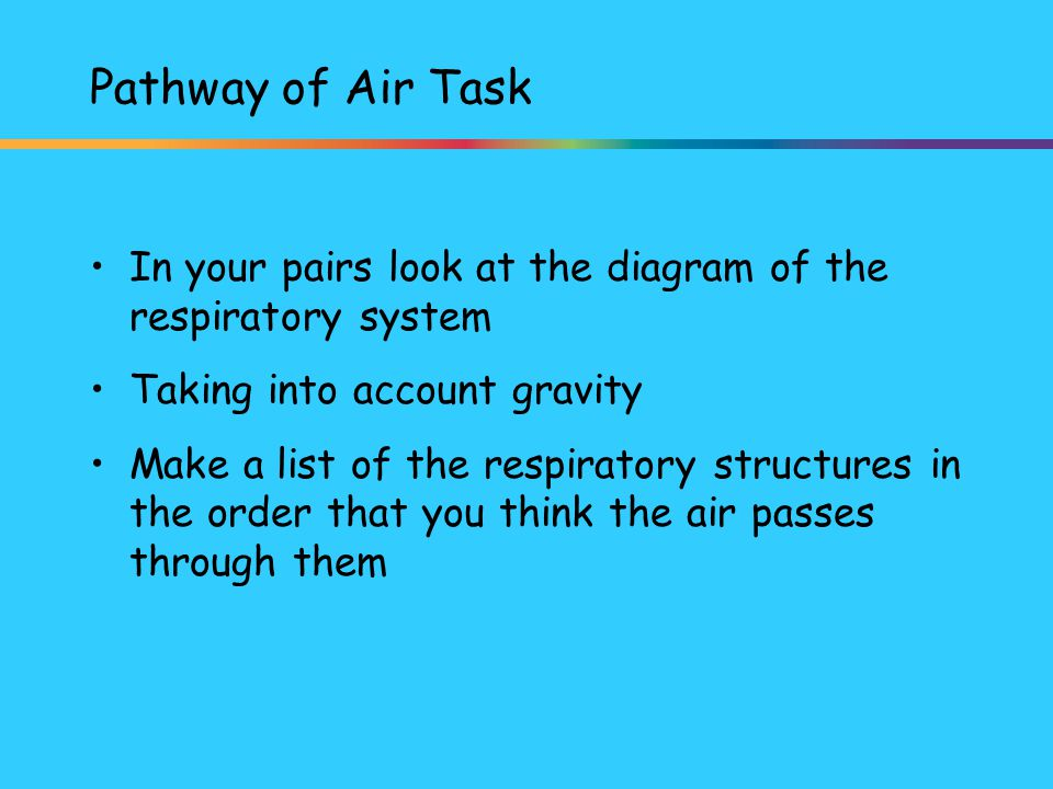 Pathway of Air Task In your pairs look at the diagram of the respiratory system. Taking into account gravity.