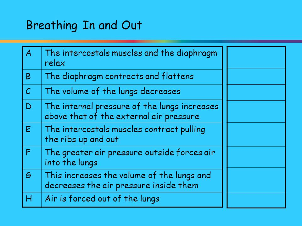 Breathing In and Out A. The intercostals muscles and the diaphragm relax. B. The diaphragm contracts and flattens.