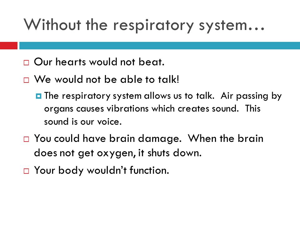 Without the respiratory system…