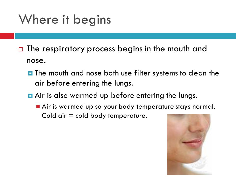 Where it begins The respiratory process begins in the mouth and nose.