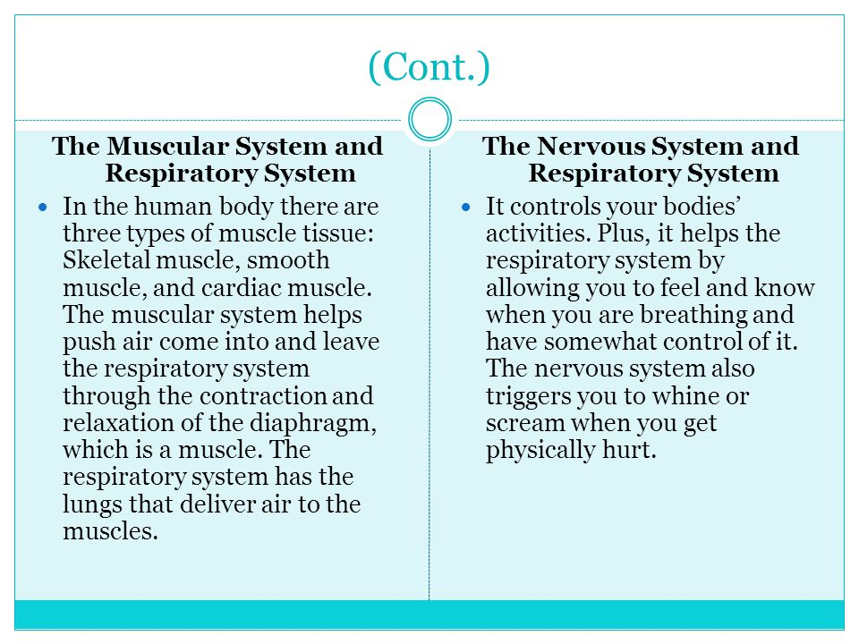 (Cont.) The Muscular System and Respiratory System